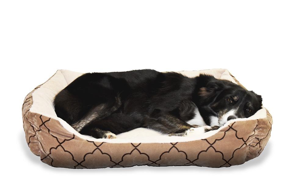 Hundebetten Materialien die besten Hundebetten